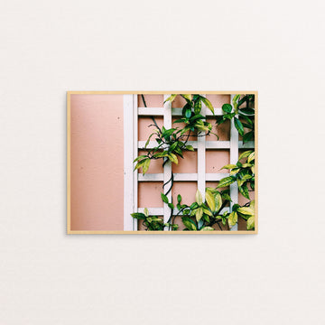 Plants on Peach Print
