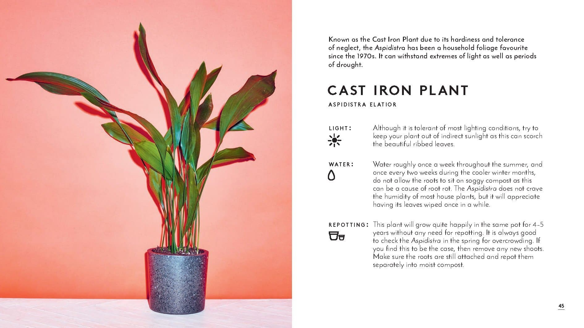 Little Book Of House Plants And Other Greenery We Built This City