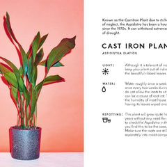 Little Book of House Plants and Other Greenery