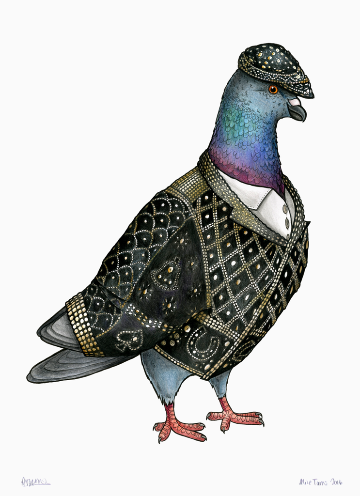 Pearly King Pigeon
