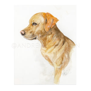 Yellow Lab Profile Portrait, 11x14""