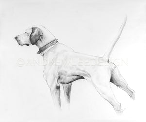 The Golden Hour Hunt (English Pointer Study), 14x16.5""