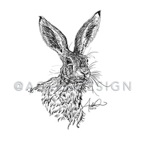 Wild Hare Illustration