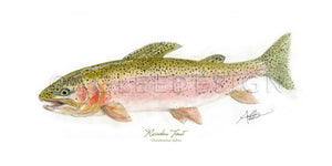 Rainbow Trout WC