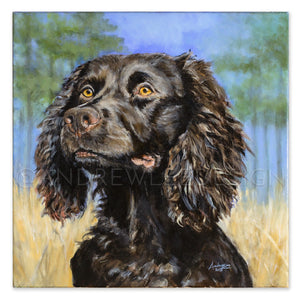 Golden Eye, Boykin Spaniel, 20x20""