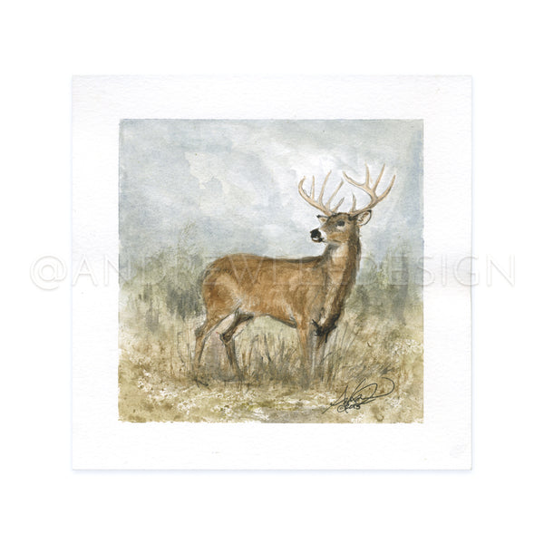 Ten Point Whitetail Study, 8x8""
