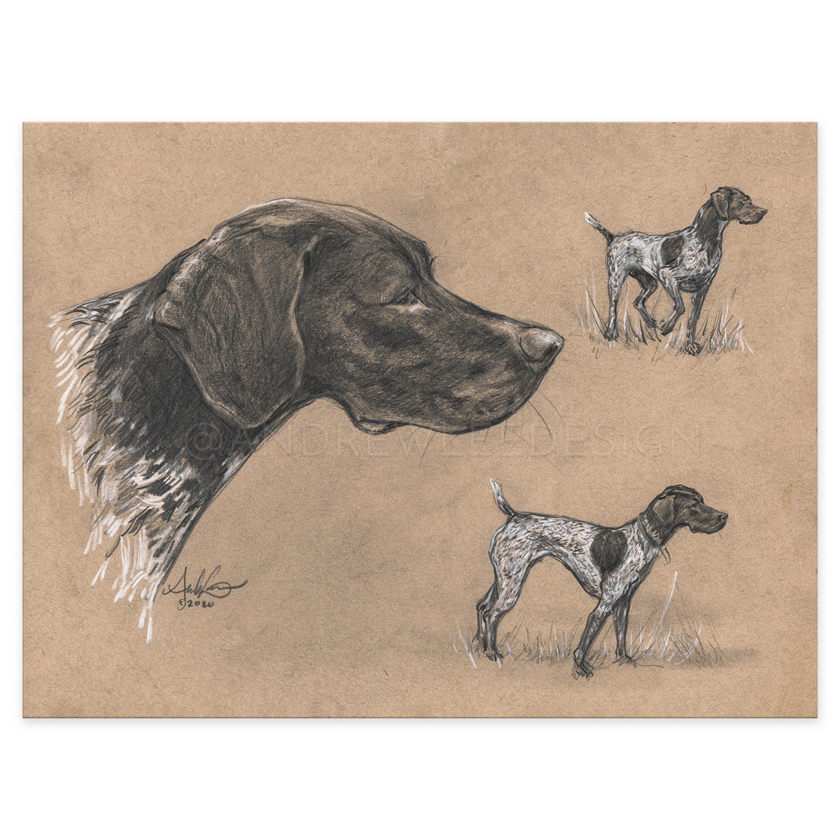 "German Shorthaired Pointer Study, 9x12"" Print"