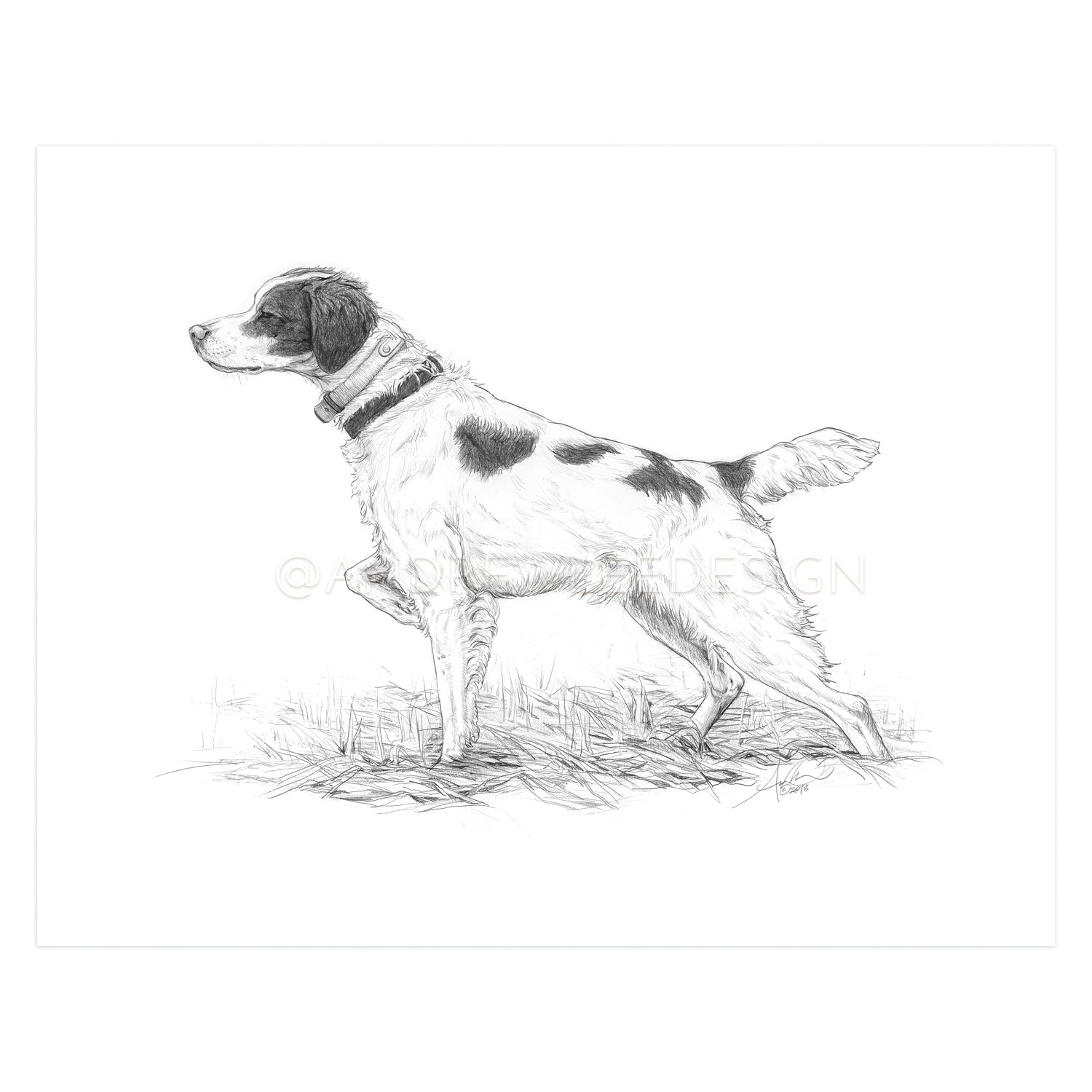 "Brittany Spaniel in Pencil, 11x14"" Print"