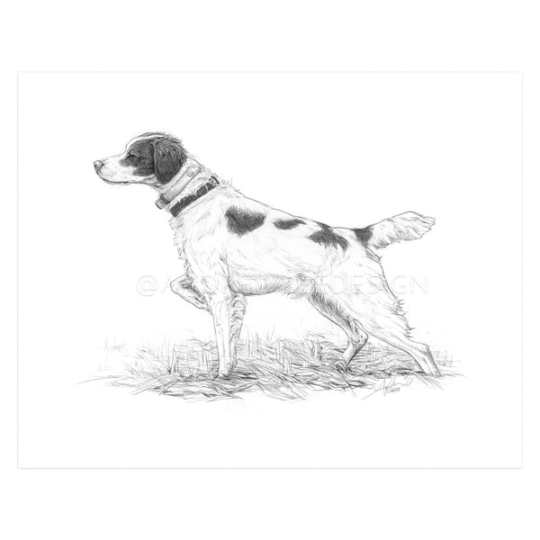 Brittany Spaniel in Pencil, Print