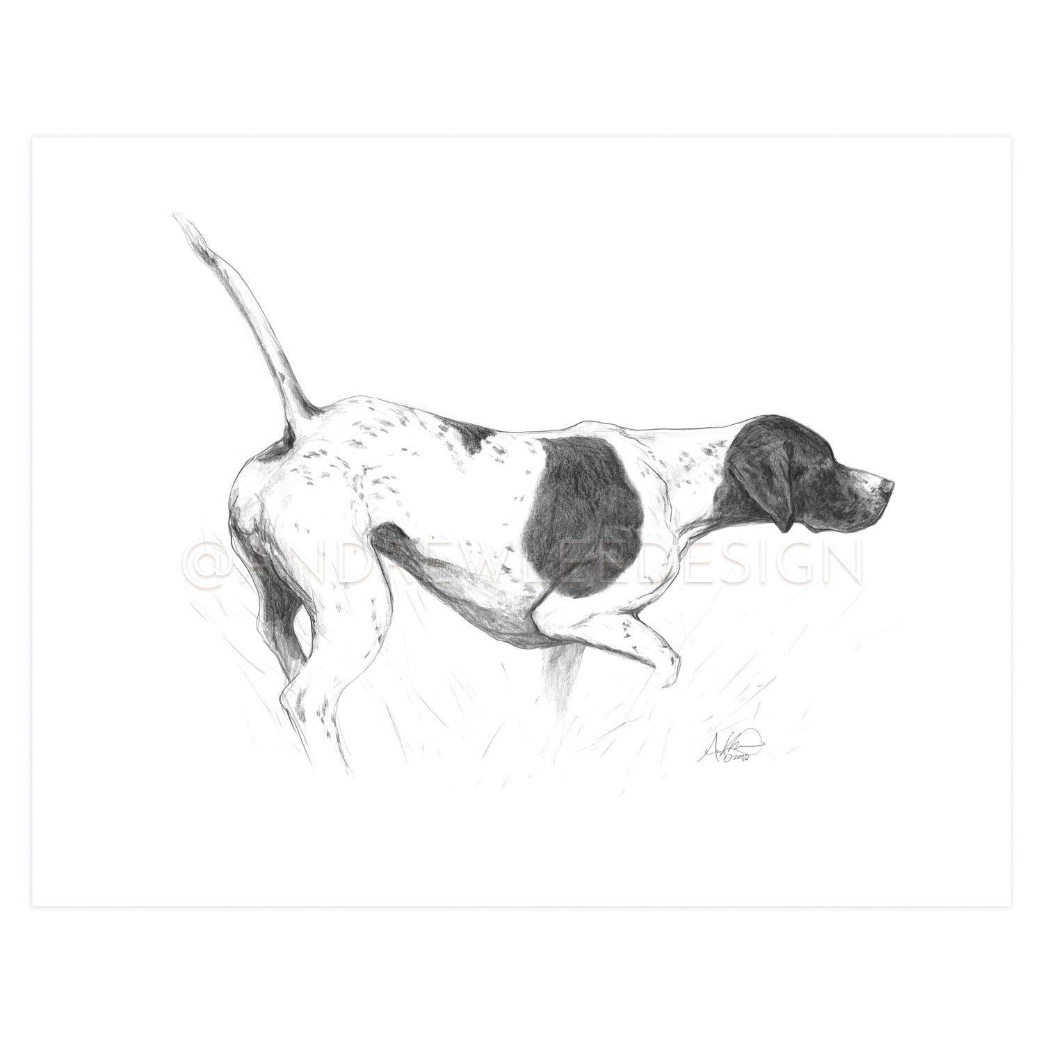 "English Pointer in Pencil, 11x14"" Print"