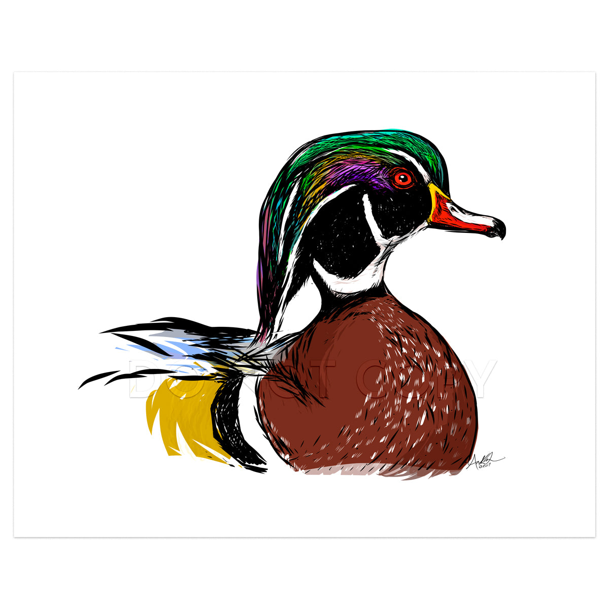 "Wood Duck Drake on Water, 8x10"" Print"