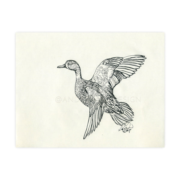Blue Wing Teal Ink Sketch