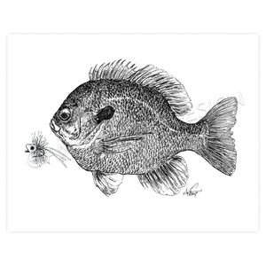 Bluegill Bream and Popper Fly, 11x14""