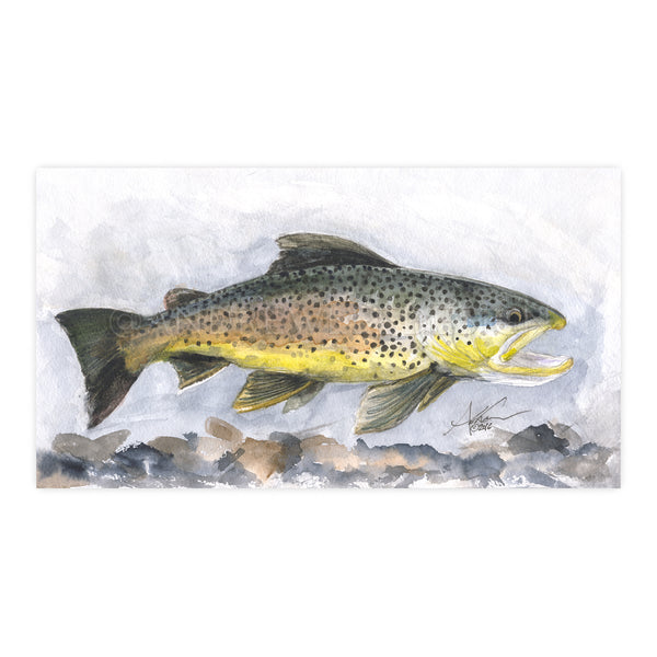 Brown Trout Study