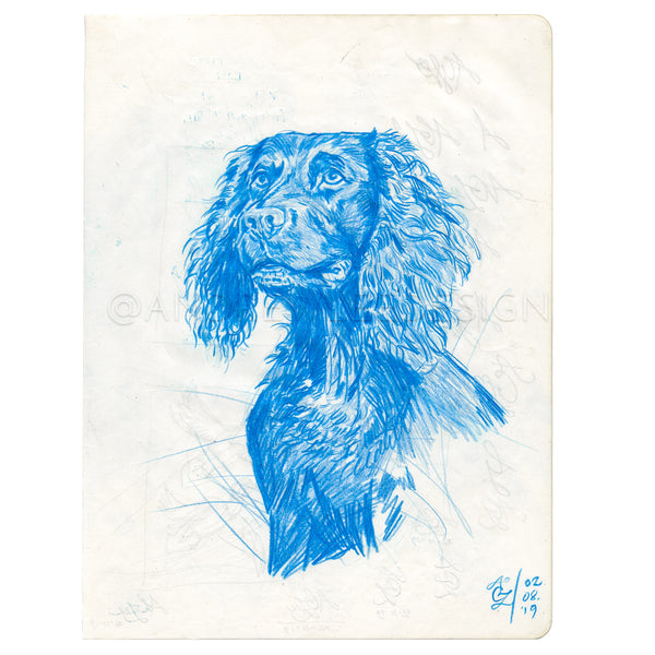 Boykin in Blue Sketch, 7.25 x 10""