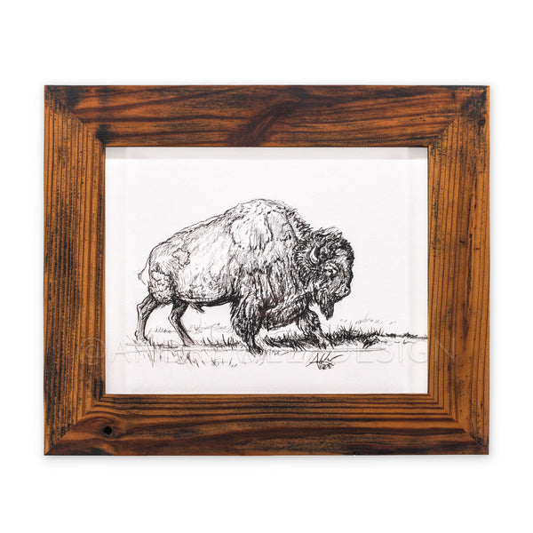 American Bison study