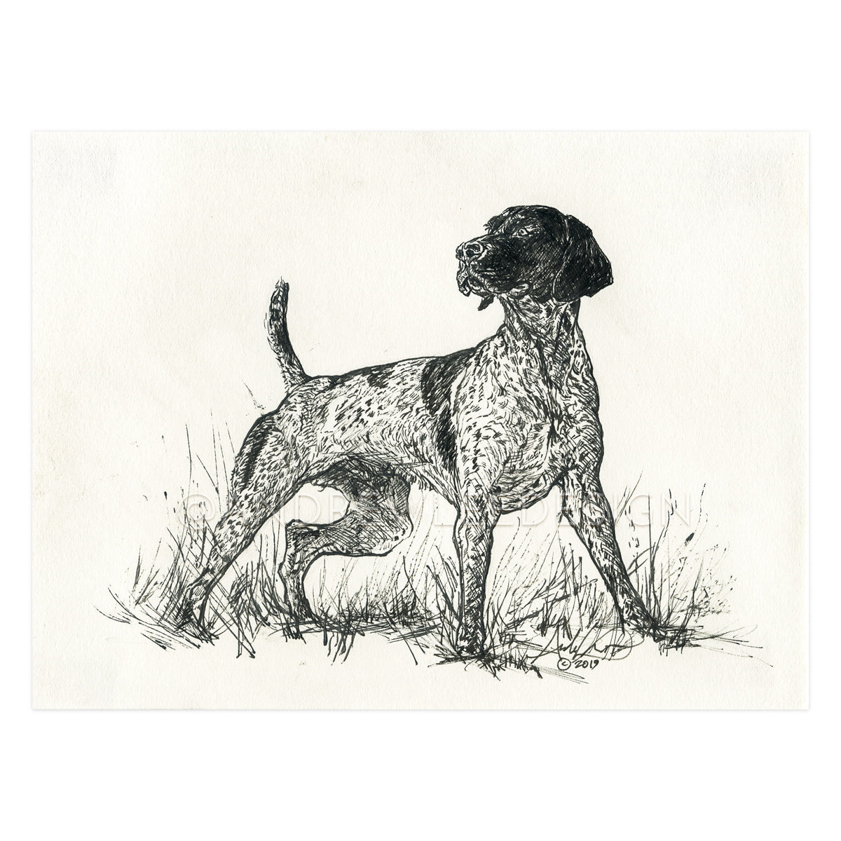 German Shorthaired Pointer, 6x8""