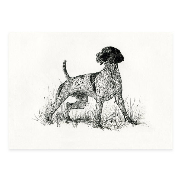 "German Shorthaired Pointer in Ink, 5x7"" Print"