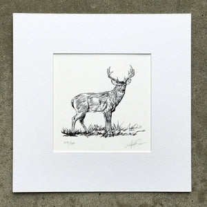 Whitetail Monster Buck Illustration