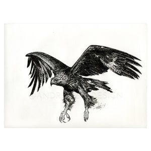 Golden Eagle in Flight, 9x12""