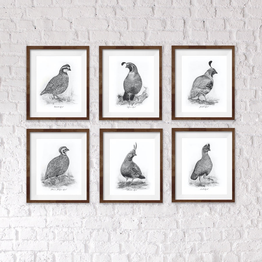 "Scaled Quail, 6 of 6, 8x10"" Print"