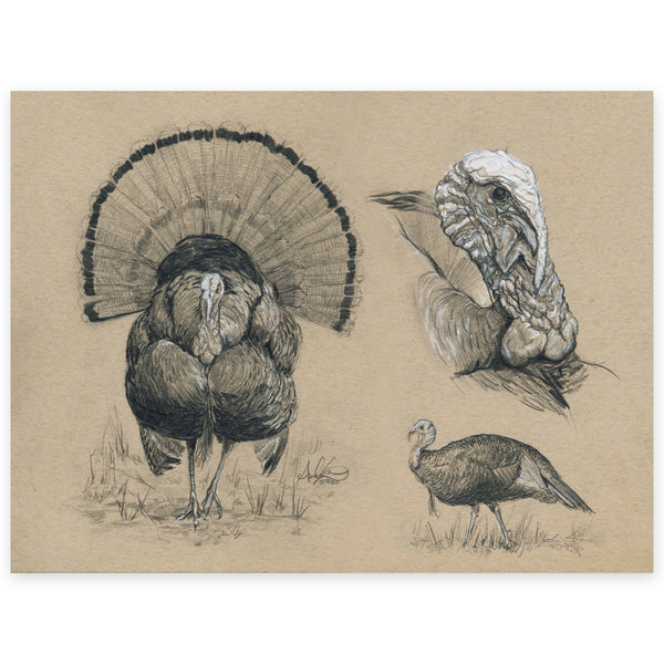 Original Eastern Wild Turkey Tom Illustration, 9x12""