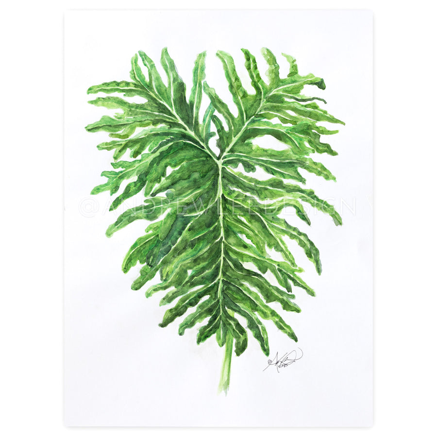 Philodendron Leaf Study