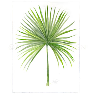 Saw Palmetto 2 of 2, 22x30""