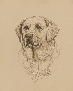 Ink Illustration Dog Portrait