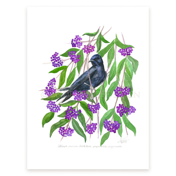 Beautyberry, Purple Martin
