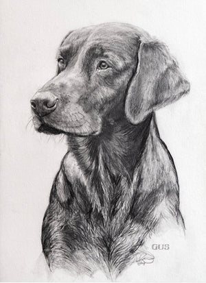 Pet Portrait Drawing, Pencil, Ink, Charcoal