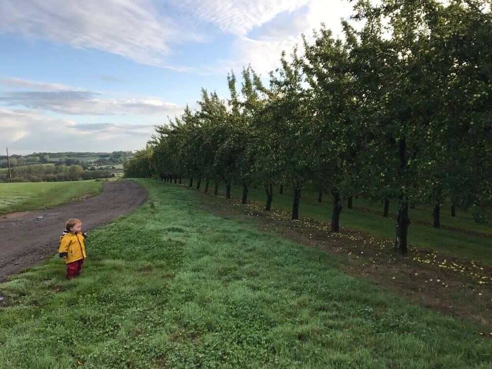 The apple orchard at the campsite