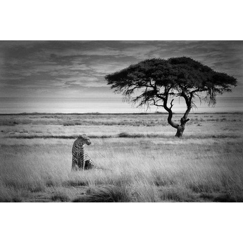 Mario Gerth Photography: African Genesis - Cheetah