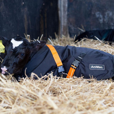 HOW TO CARE FOR YOUR CALF JACKET | ANIMAC