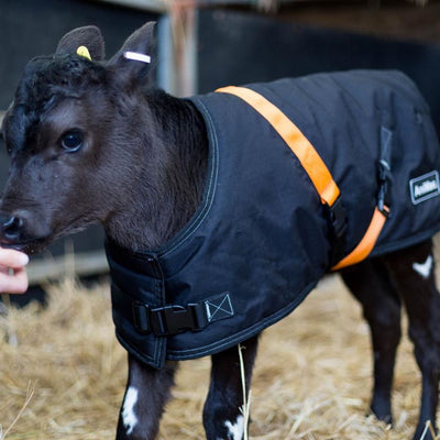 WHICH CALF JACKET IS BEST?  | ASK ANIMAC