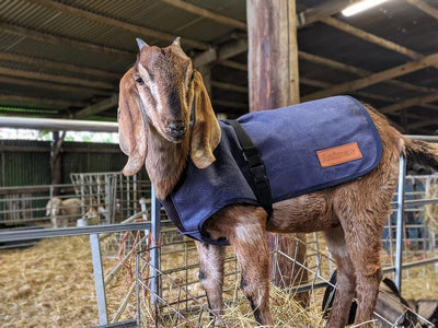 HOW TO CARE FOR YOUR CANVAS GOAT COAT | ASK ANIMAC