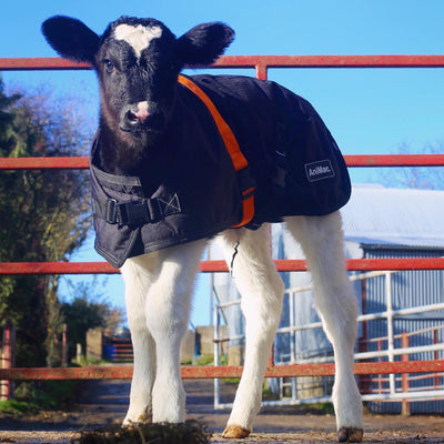 WHAT'S THE DIFFERENCE BETWEEN CALF JACKETS?  | ASK ANIMAC