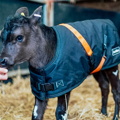 GET YOUR CALF JACKETS READY | ANIMAC