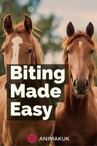 ADVICE: Bitting made easy