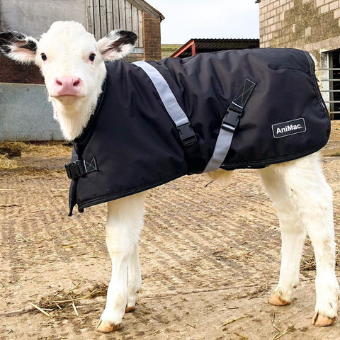 AniMac-Wear super Calf Jacket on a white calf
