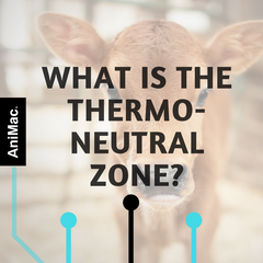 What is the thermo-neutral zone?