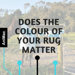 Does the colour of your rug matter?
