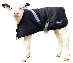 Calf Jacket AniMac