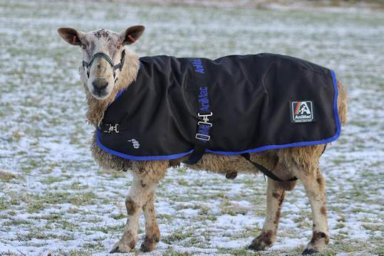 ANIMAC RAM RUG AND WATERPROOF SHEEP COAT