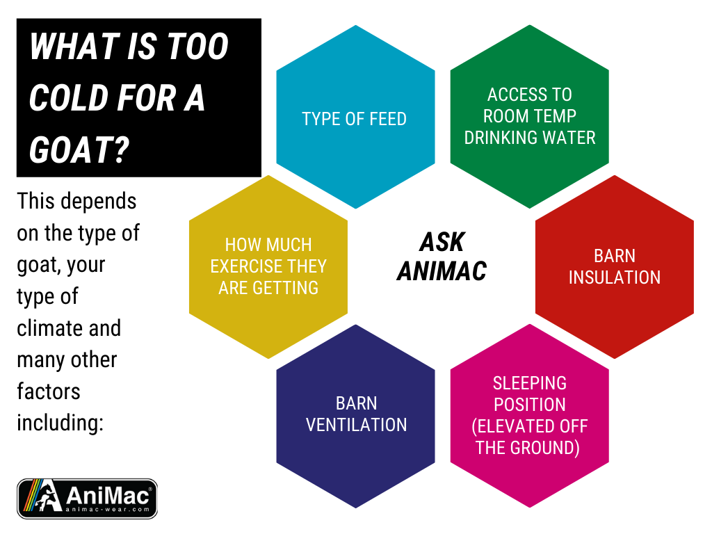 Ask AniMac |  When is a goat cold enough for a goat coat?