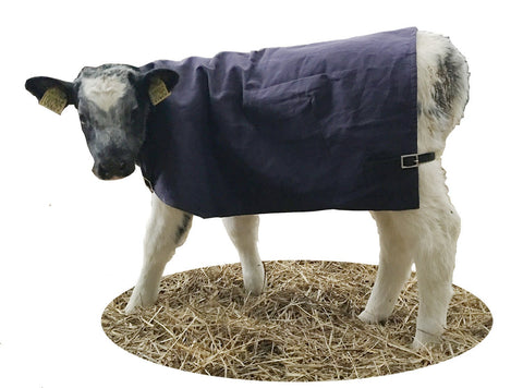 AniMac calf jacket canvas wool lined calf blanket