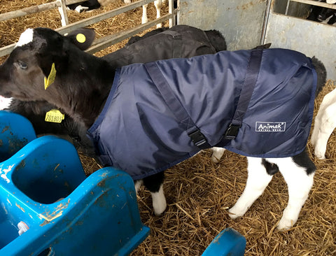 calf jacket ireland