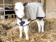 Travel & Show Sheep Coat