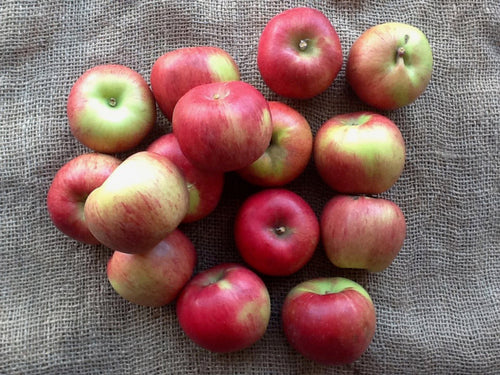 Apples - Seasonal