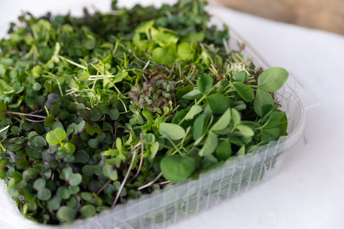 Microgreens Mix - LOCAL Central Oregon